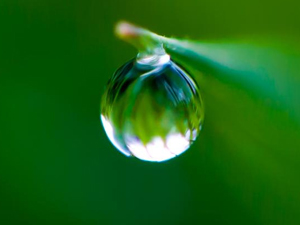 Droplet of water in focus
